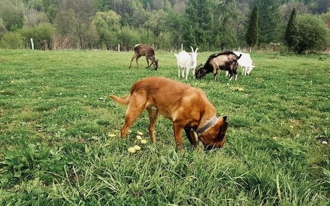 Chcą stworzyć sanktuarium dla uratowanych zwierząt (WIDEO)