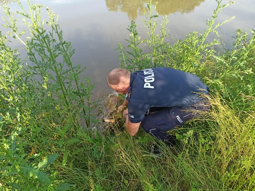 Bolkowscy policjanci uratowali koziołka