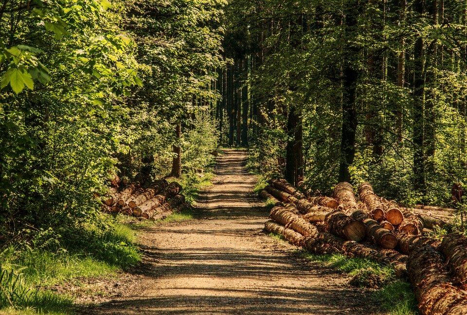Grzybobranie zakończyła nocką w lesie