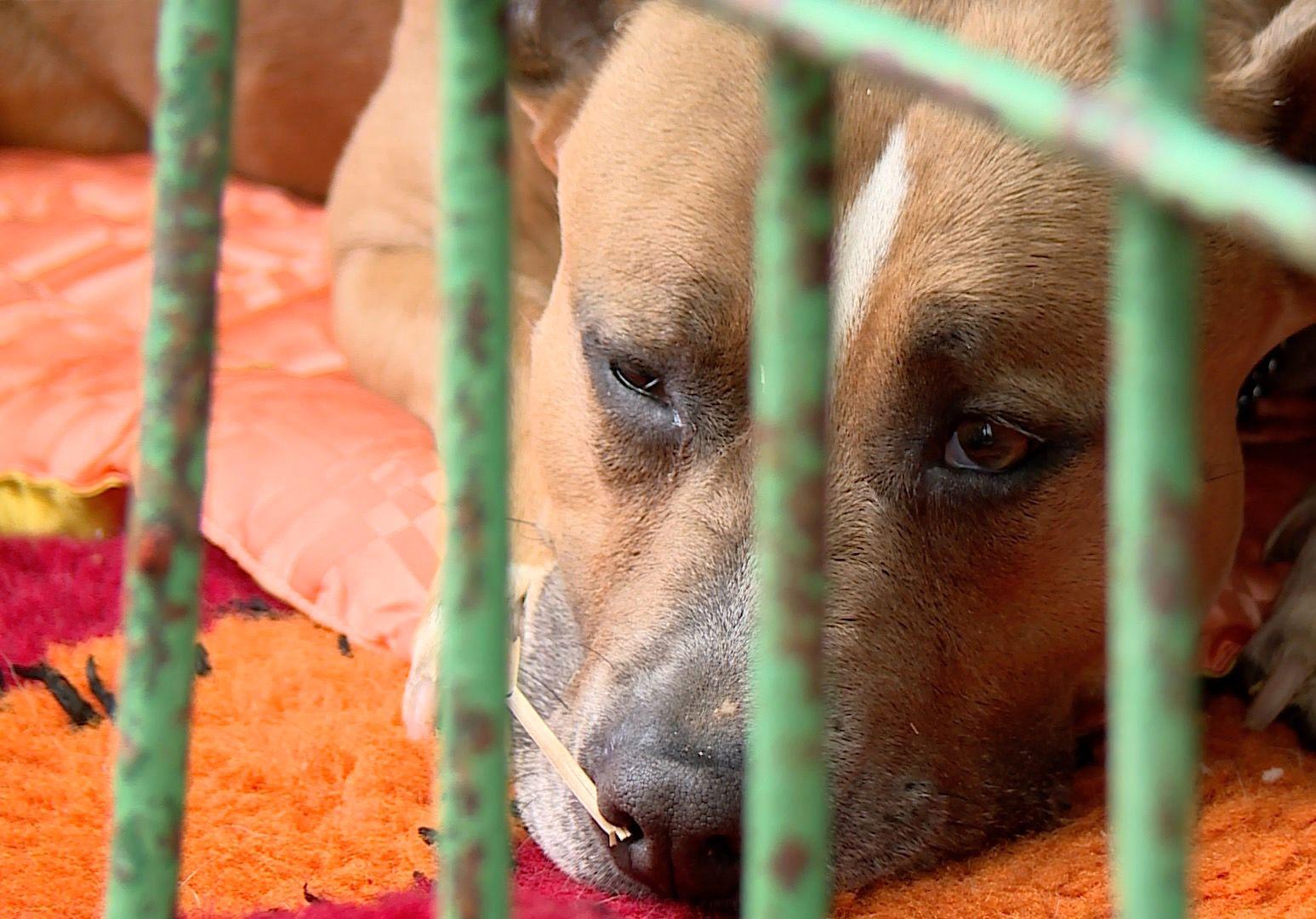 Dają wyprawkę, by zachęcić do adopcji psa