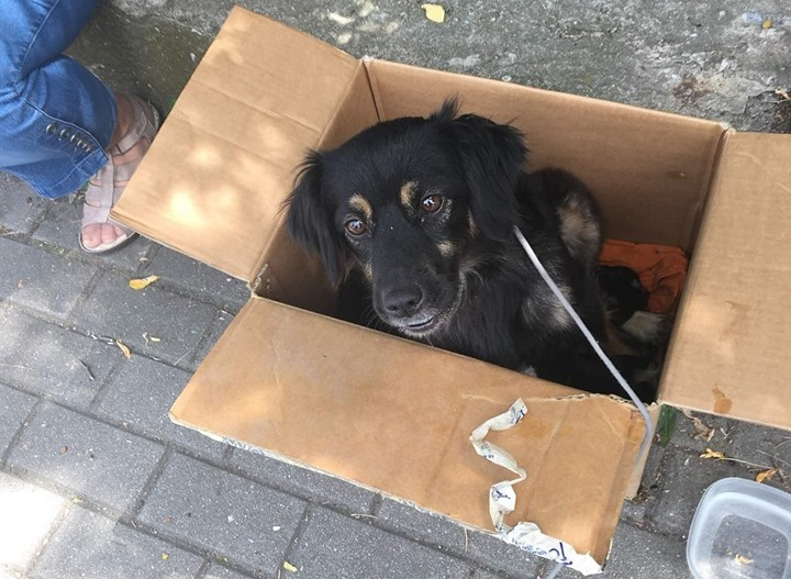 Psy porzucone w upalny dzień