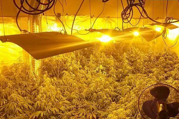 Plantacja marihuany w mieszkaniu