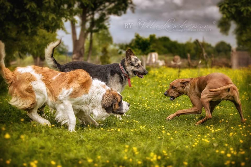 Pies uczulony na mięso, trawę i… ludzi (WIDEO)
