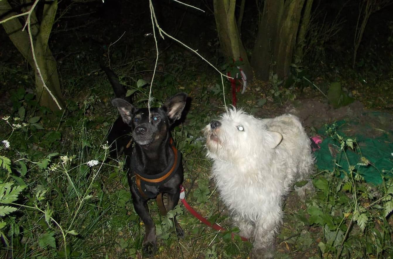 Wystraszone psy czekały na ratunek (WIDEO)