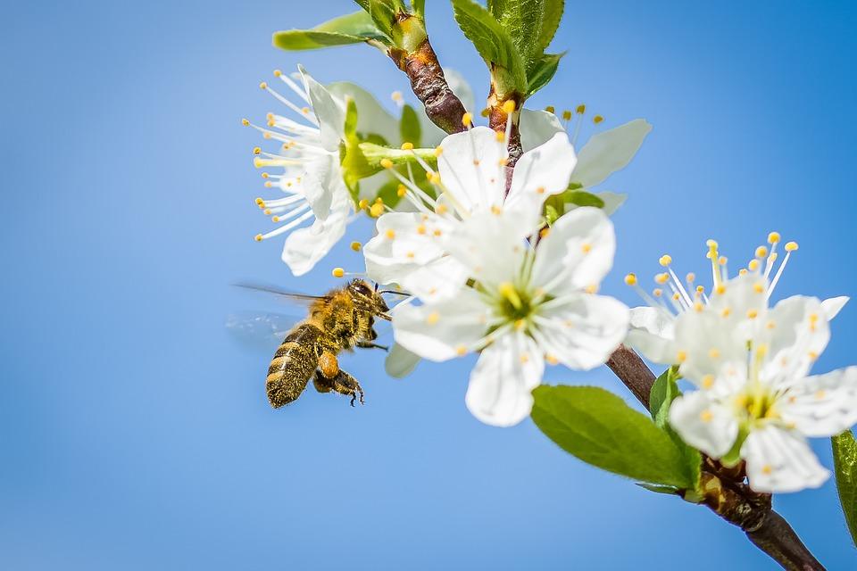 Wielki Dzień Pszczół – na co nam te owady? (INFOGRAFIKA)