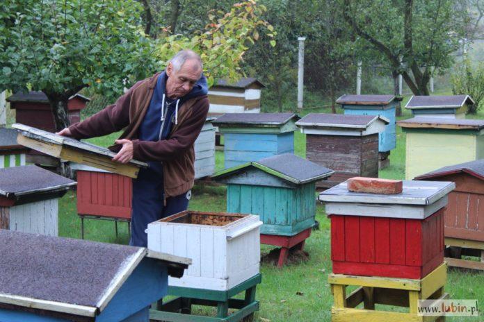 W podlubińskiej pasiece padło 350 tys. pszczół. Kto zawinił?