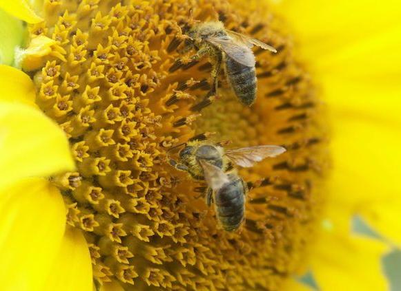 GMINA PRZEMKÓW. Ciekawie o pszczołach