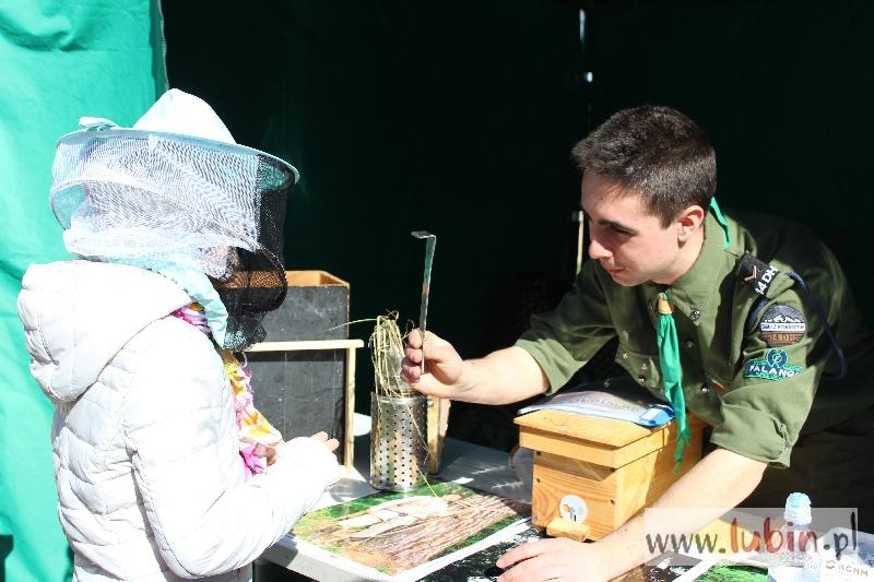 Pszczoły opanowały lubiński park