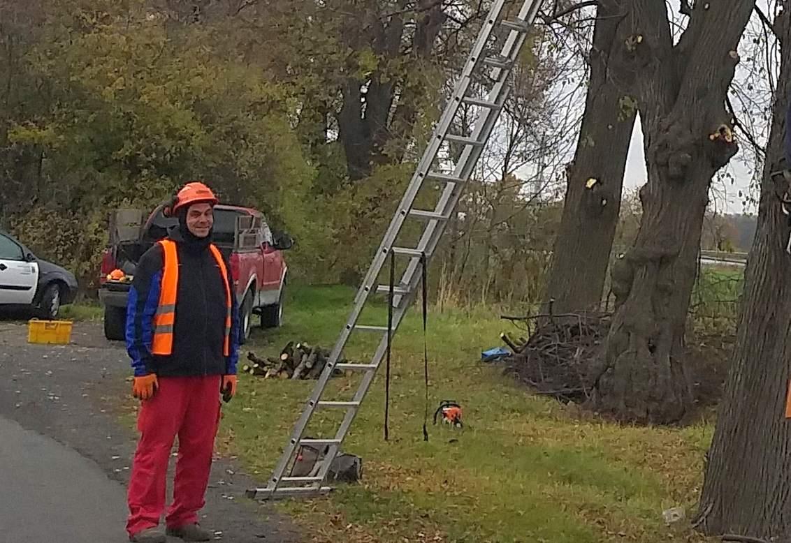 W Legnickim Polu trwa wycinka suchych gałęzi