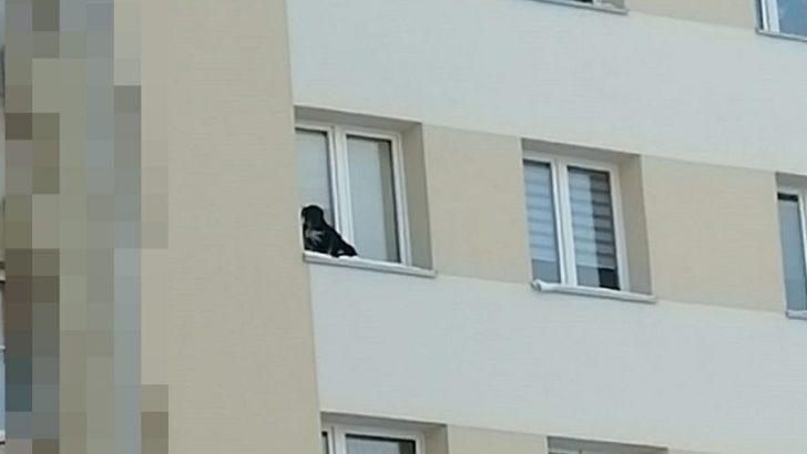 Wystawił psa na parapet na 9. piętrze
